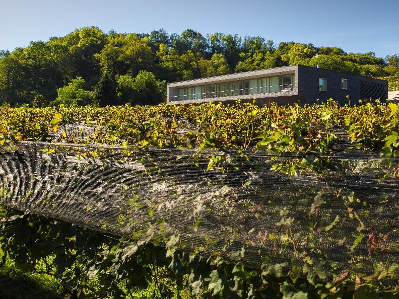 Image 2 - Agriloro SA Tenimento la Prella
