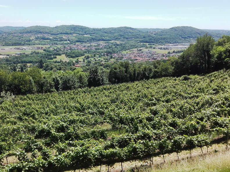 Image 5 - Latini's Winery