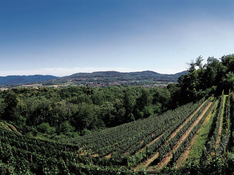 Image 2 - Winery Mendrisio, Agriloro SA