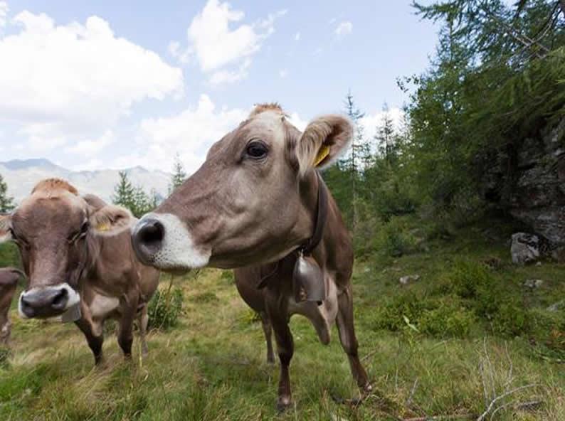 Image 0 - Come nascono i latticini