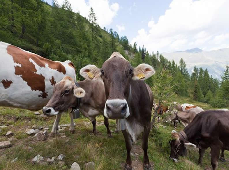 Image 1 - Besichtigung der Alp