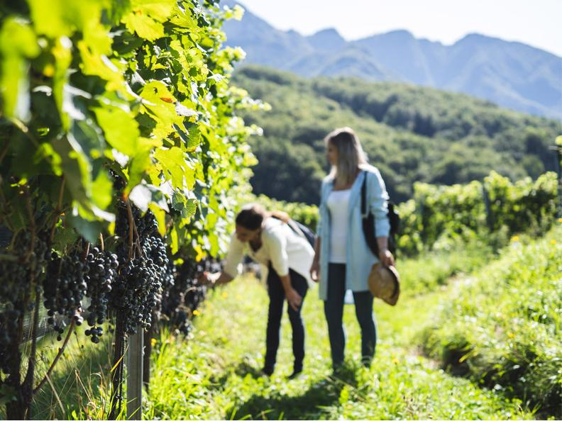 Image 2 - Visit the Azienda Agricola Bianchi