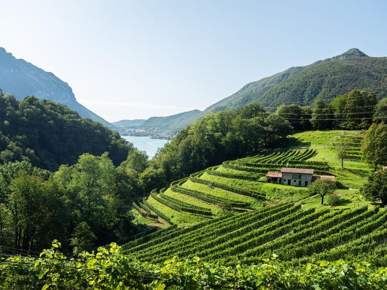 Image 3 - Visit the Azienda Agricola Bianchi