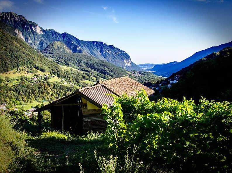 Image 3 - Azienda Agricola Bianchi
