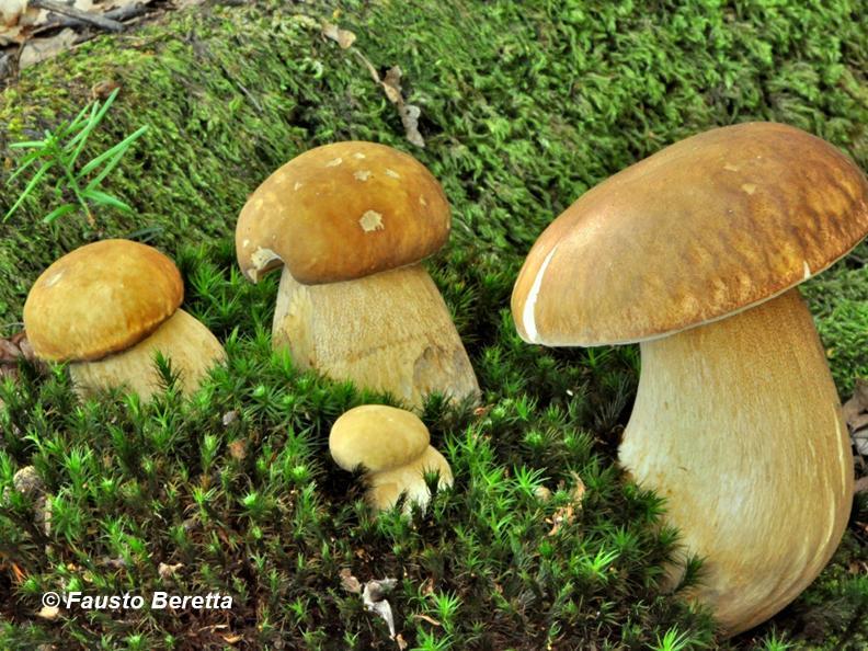 Image 0 - Il magico mondo dei funghi