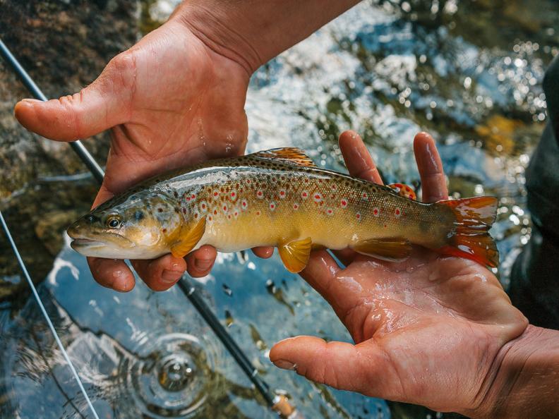 Image 0 - Ticino River Lodge - pescare con guida