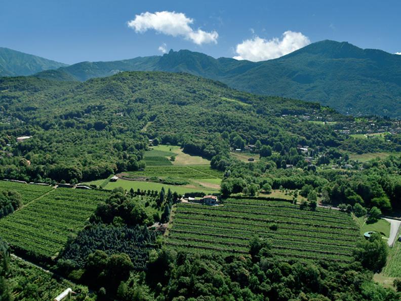 Image 3 - Cantina vinicola Tamborini Carlo eredi SA