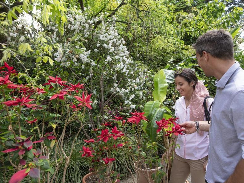 Image 4 - Brissago-Inseln - Botanischer Garten