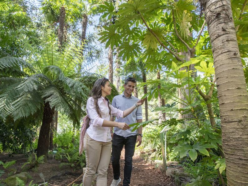 Image 0 - Brissago-Inseln - Botanischer Garten