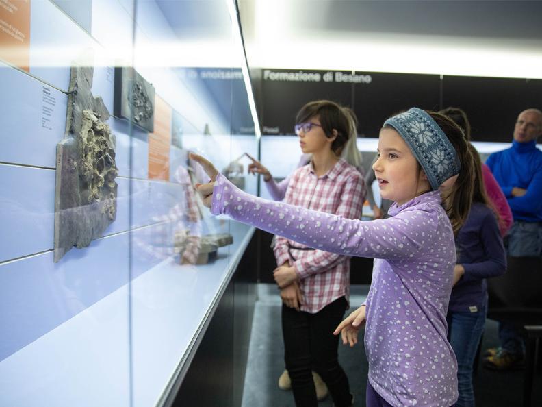 Image 5 - Museo dei fossili del Monte San Giorgio
