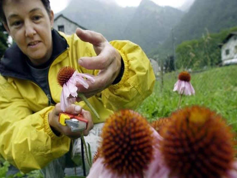 Image 2 - Alpine Institute for Life Sciences