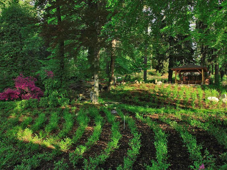 Image 5 - Piantagione e Casa del tè con cerimonia