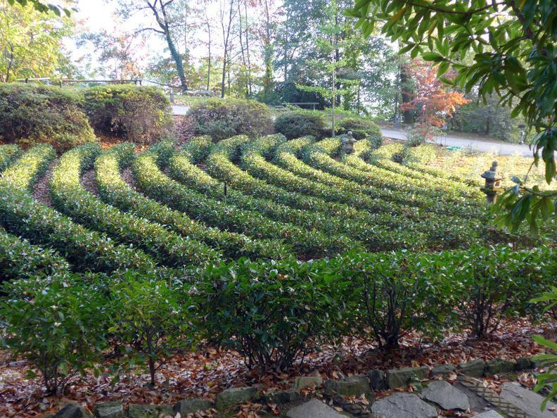 Image 0 - Piantagione e Casa del tè con cerimonia