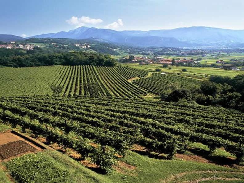 Image 1 - Vendemmia nella regione Mendrisiotto e Basso Ceresio