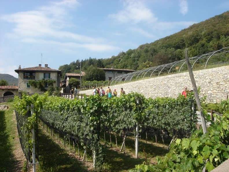 Image 2 - Vendemmia nella regione Mendrisiotto e Basso Ceresio